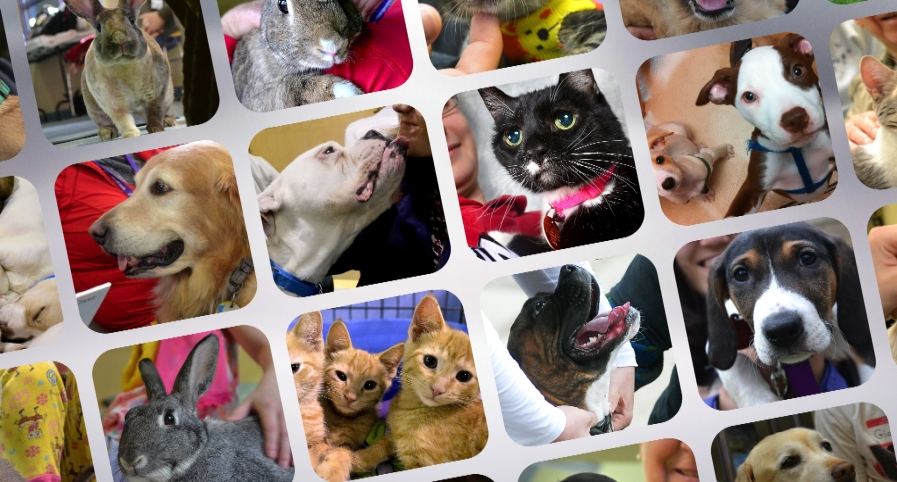 Animal Friends Tail-A-Thon