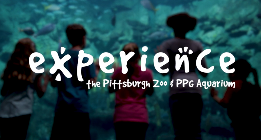 Experience The Pittsburgh Zoo & PPG Aquarium